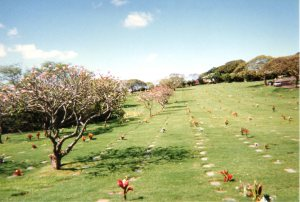 Magnolia trees in bloom at Eastertime, 1996