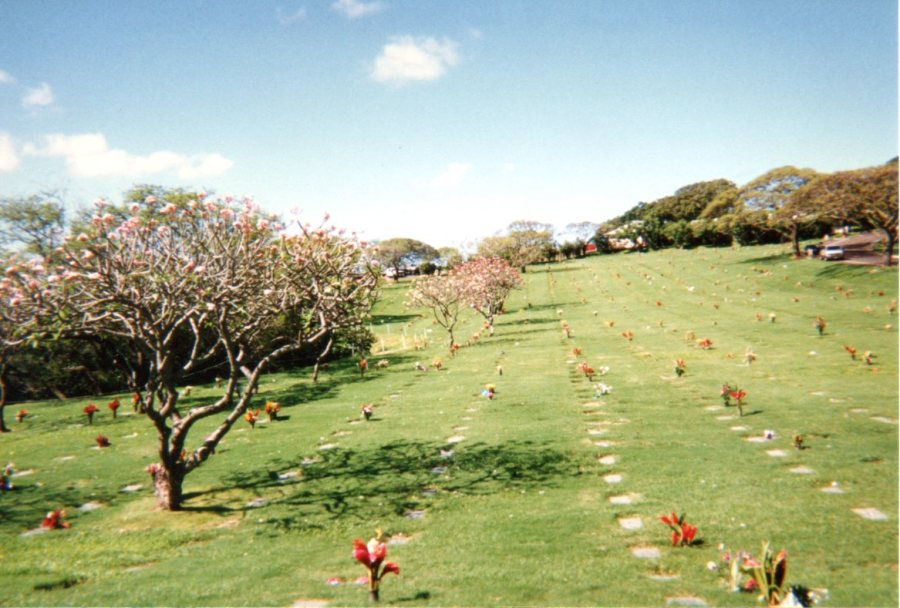 Magnolia trees in bloom at Eastertime, National Memorial Cemetery of the Pacific, Honolulu, Hawaii